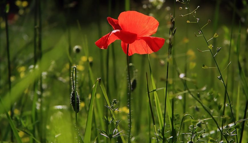 Aménagement de jardin: pourquoi devriez-vous contacter un paysagiste?